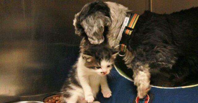 il-legame-speciale-tra-il-cane-ed-il-gatto 3