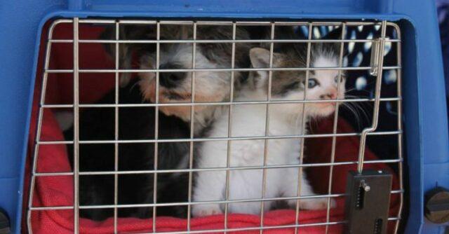 il-legame-speciale-tra-il-cane-ed-il-gatto 1