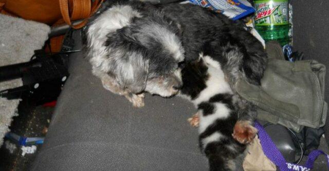 il-legame-speciale-tra-il-cane-ed-il-gatto 2