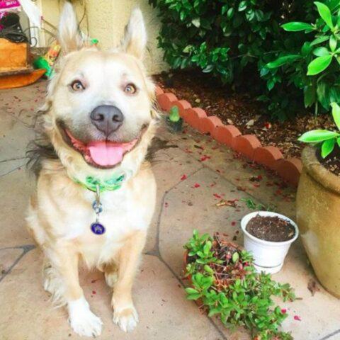 il-meraviglioso-sorriso-di-Milo