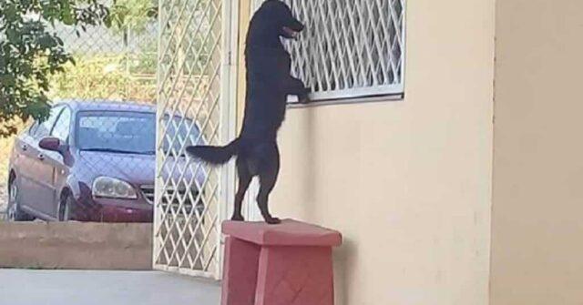 cucciolo-aspetta-il-suo-piccolo-amico-a-scuola