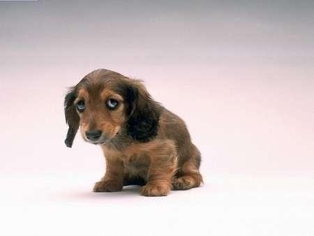 cucciolo-spaventato