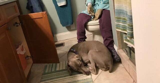 donna-crea-un-manichino-di-se-stessa-per-il-cane