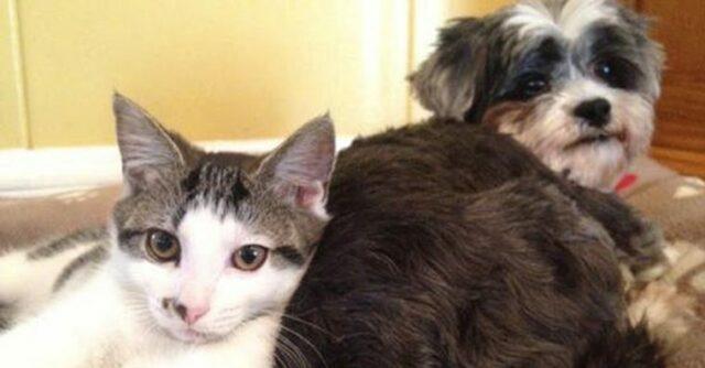 il-legame-speciale-tra-il-cane-ed-il-gatto 4