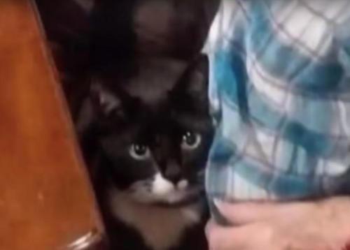 gattino-trooper