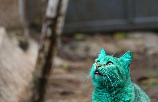 gatto-bulgaria