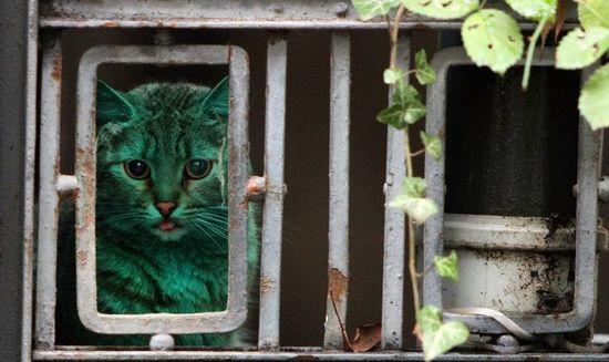 gatto-catturato