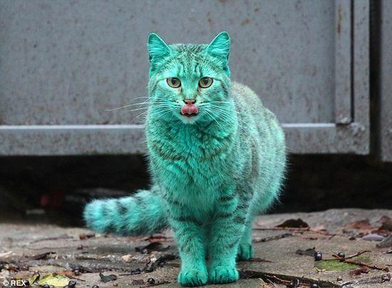 gatto-varna