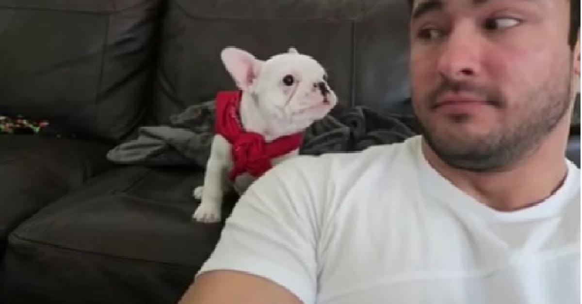 Il cucciolo risponde al suo papà