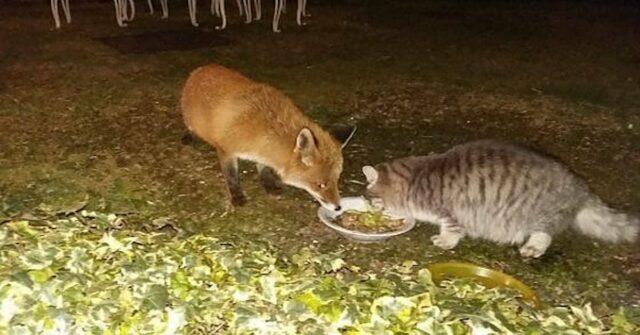 il-gatto-e-la-volpe-come-in-una-fiaba-mangiano-insieme