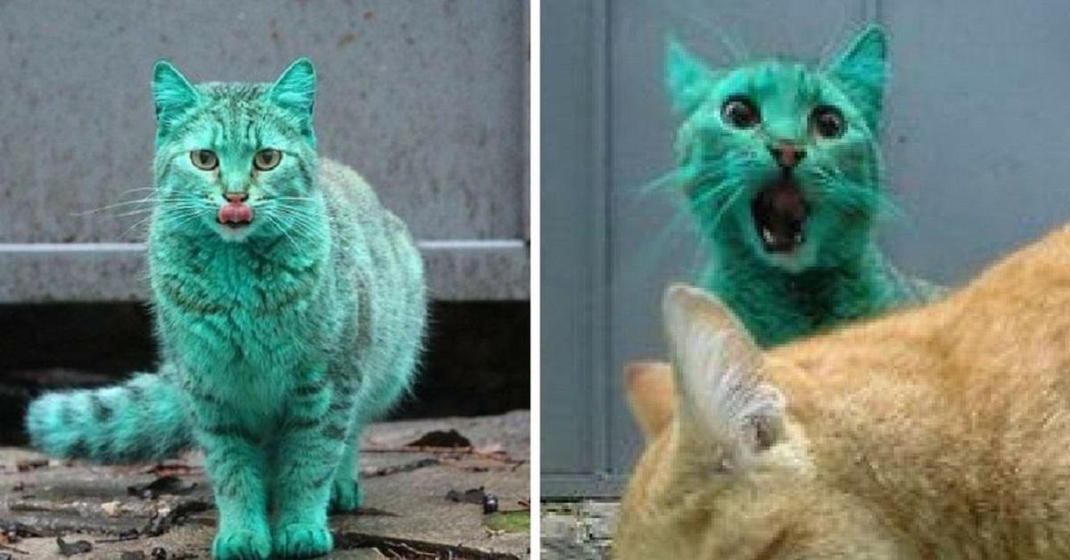 il-gatto-turchese-di-varna