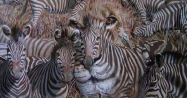 il-primo-animale-visto-svela-la-tua-personalita