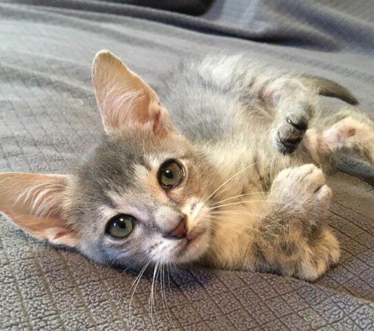 Scooter-un-gattino-molto-speciale2