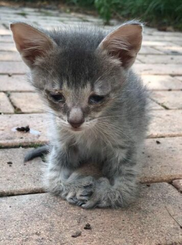 Scooter-un-gattino-molto-speciale