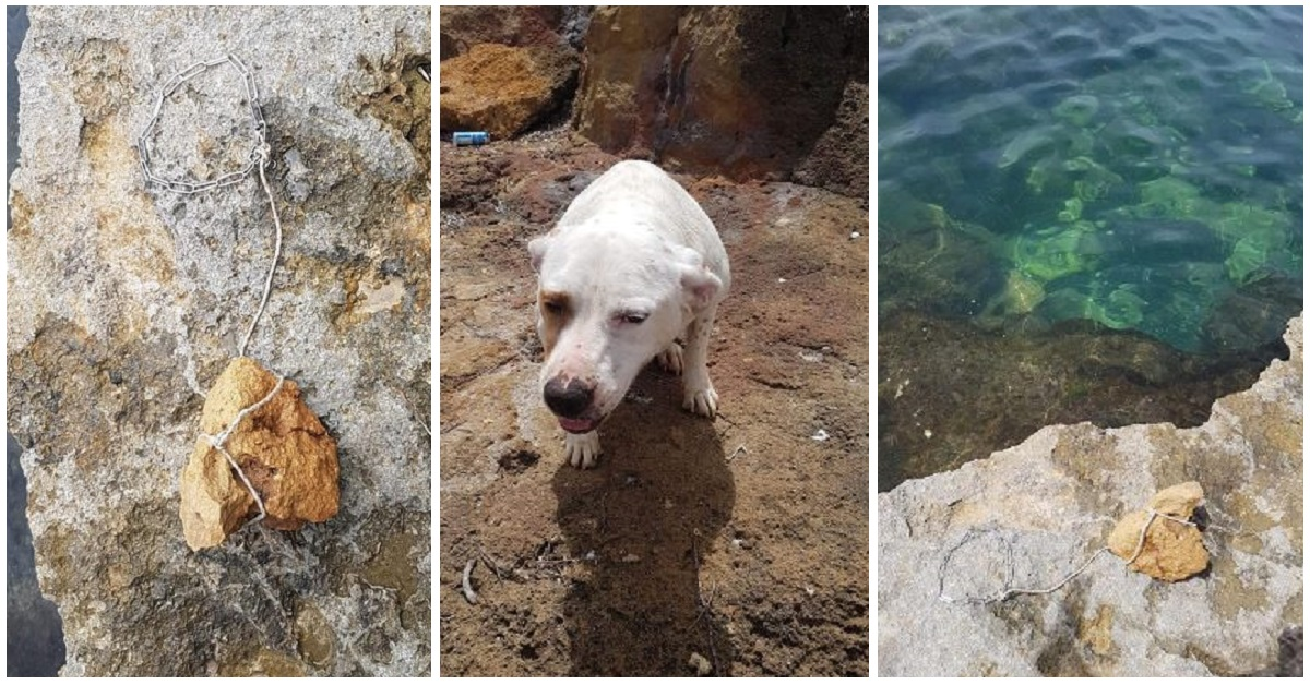 mia-la-cagnolina-gettata-in-mare-con-una-pietra-al-collo