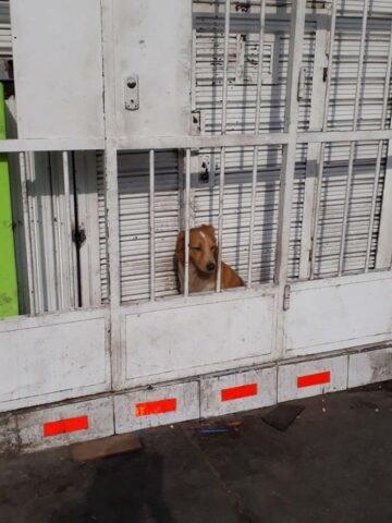 il-cane-chiuso-dietro-le-sbarre