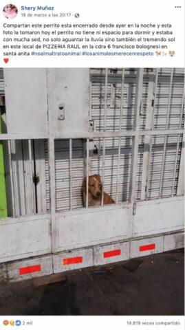 il-cane-chiuso-dietro-le-sbarre 2