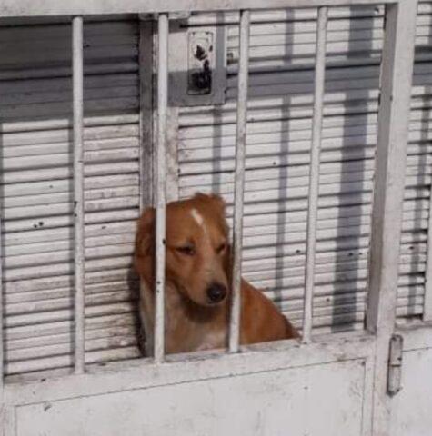 il-cane-chiuso-dietro-le-sbarre 4