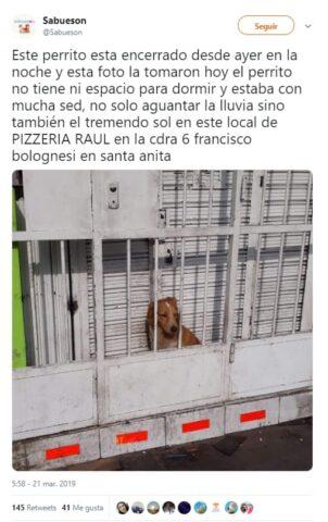 il-cane-chiuso-dietro-le-sbarre 3