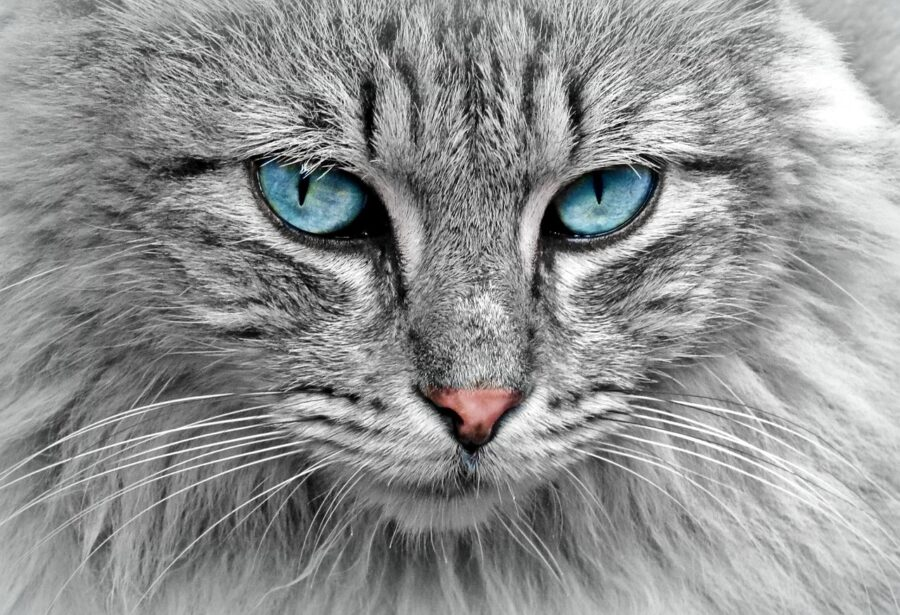 Rapporto gatto e padrone