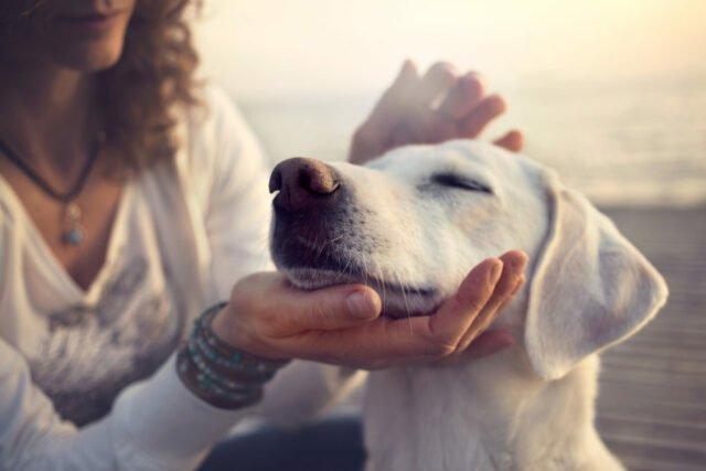 razza di cane
