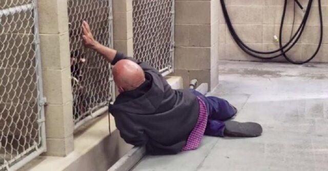 senzatetto-va-a-trovare-i-suoi-cani-prima-delleutanasia