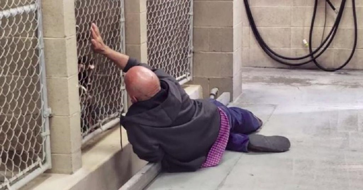 Senzatetto va a trovare i suoi cani prima dell'eutanasia