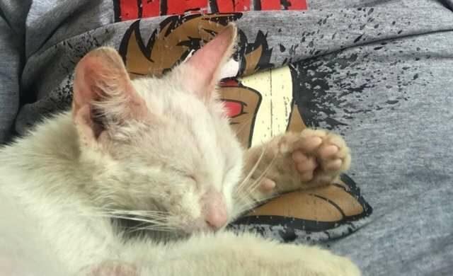 la-strana-storia-di-Ali-e-del-gattino
