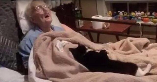trooper-il-gatto-che-veglia-la-nonna