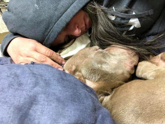 volontaria-veglia-un-cane-in-fin-di-vita