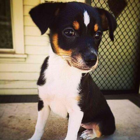 Penny-una-cagnolina-molto-speciale 1