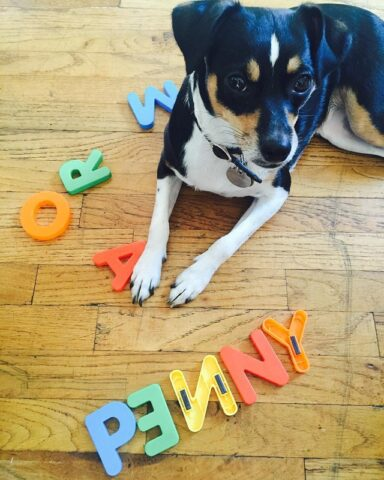 Penny-una-cagnolina-molto-speciale 2