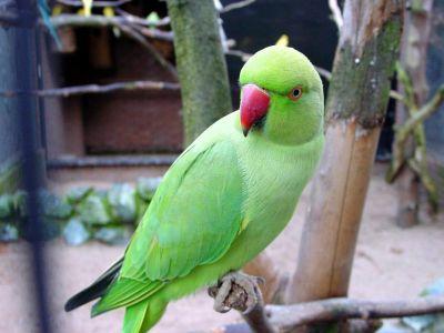 liberati-500-uccelli 3