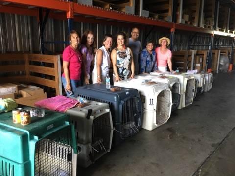 salvati-tre-cento-animali-dall'uragano