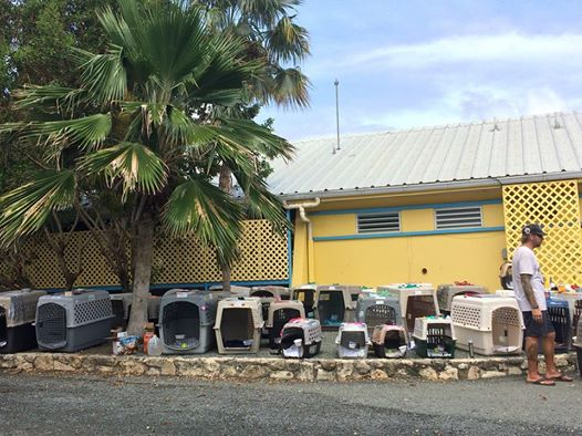 salvati-tre-cento-animali-dall'uragano 1