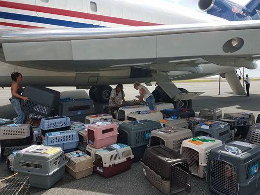 salvati-tre-cento-animali-dall'uragano 2