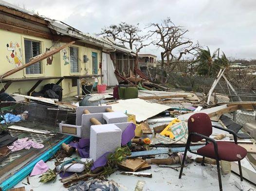 salvati-tre-cento-animali-dall'uragano 4