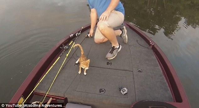 i-due-gattini-abbandonati-in-mezzo-al-lago 1