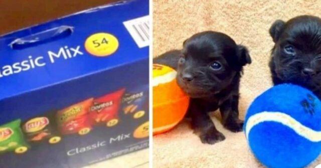due-cuccioli-trovati-nel-secchio-della-spazzatura
