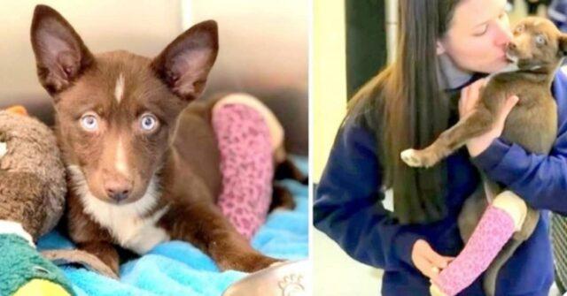 Tahani-il-cane-con-gli-occhi-blu