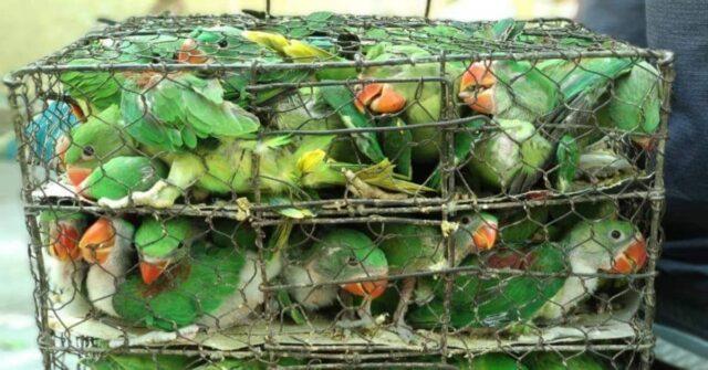 il-salvataggio-dei-550-uccelli-tenuti-in-condizioni-orribili