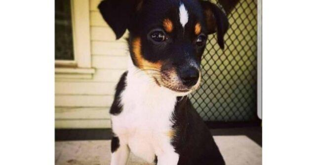 Penny-una-cagnolina-fuori-dall'ordinario