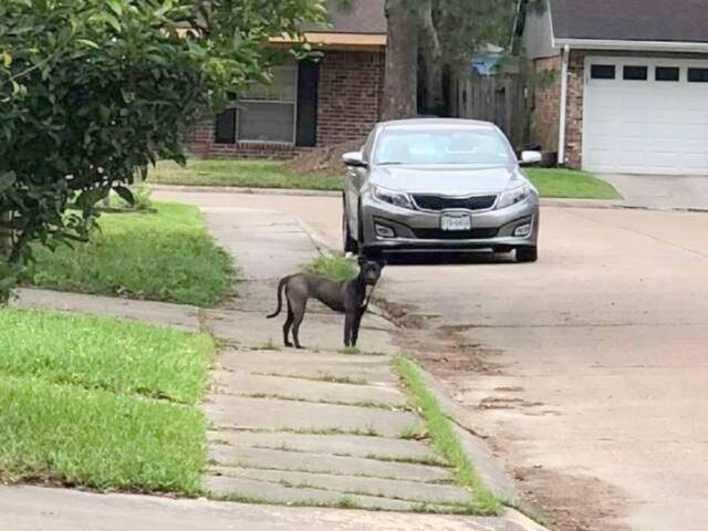 il-cane-spaventato