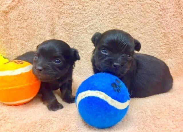 i-due-cuccioli-abbandonati-nella-spazzatura 2
