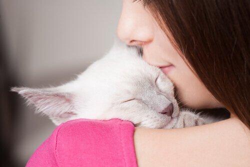 Amante-dei-gatti