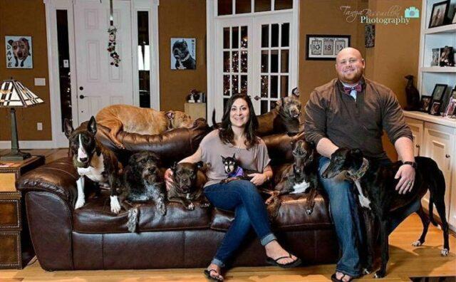 coppia-fa-costruire-un-letto-enorme-per-far-dormire-con-loro-i-cani 3