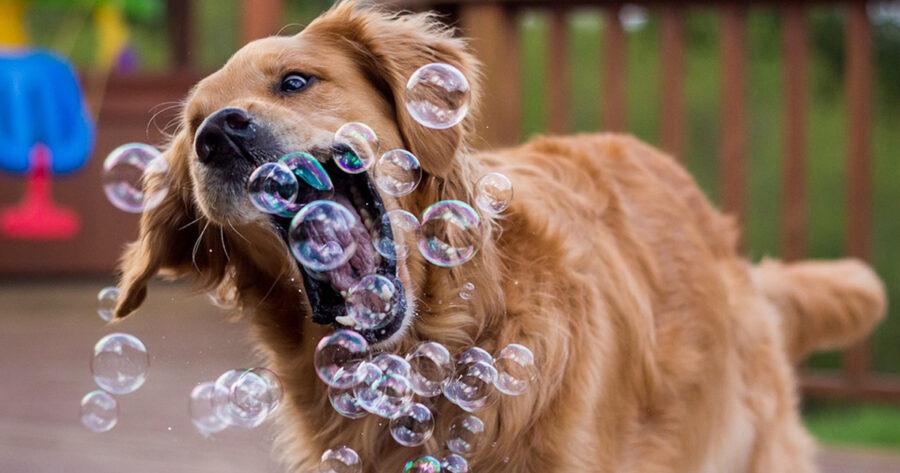 Gestire e educare un cane