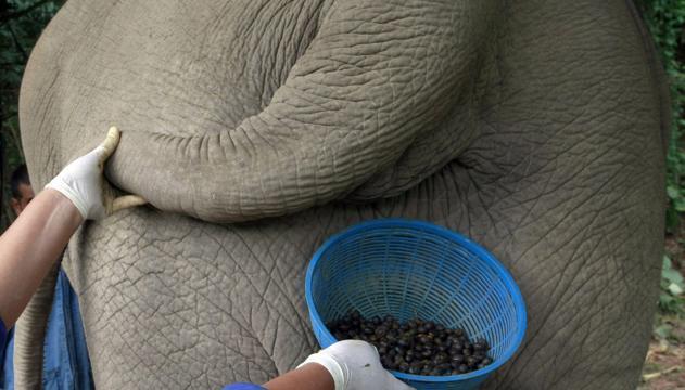 Il-caffe-prodotto-dagli-elefanti