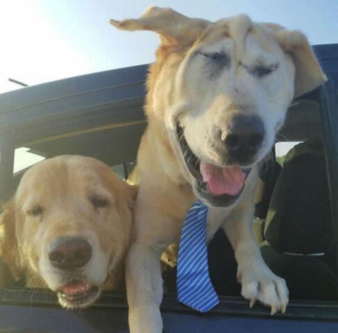 Il-cane-Beaux-e-stato-adottato
