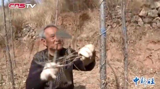 Ma-Sanxiao-alberi